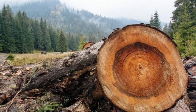 Почти треть украинских лесов не учитываются - Госагенство
