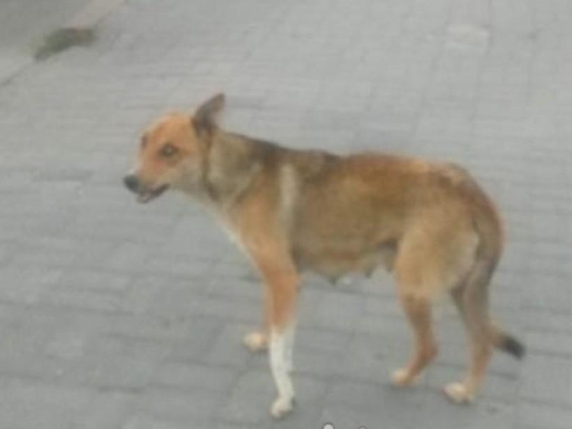 В Запорожье ребенка искусала собака (ФОТО)