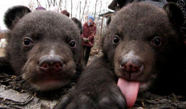 Вместо щенков китаец вырастил гималайских медведей