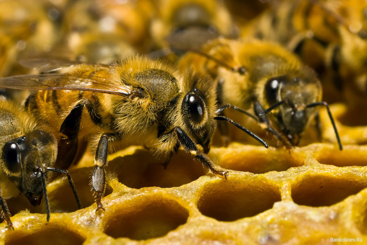 В Австрии фермера признали виновным в чрезмерном использовании инсектицида хлорпирифоса