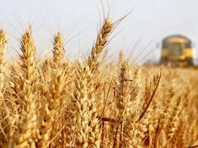 Дожди в Черкасской области замедлили уборку урожая (ВИДЕО)