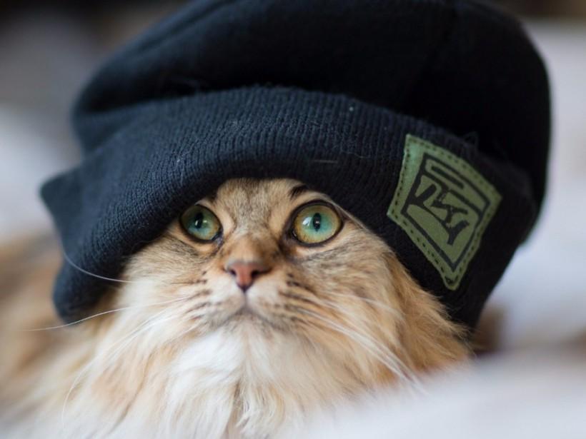 Синоптик:В воскресенье в Украине ощутимо похолодает (КАРТА)