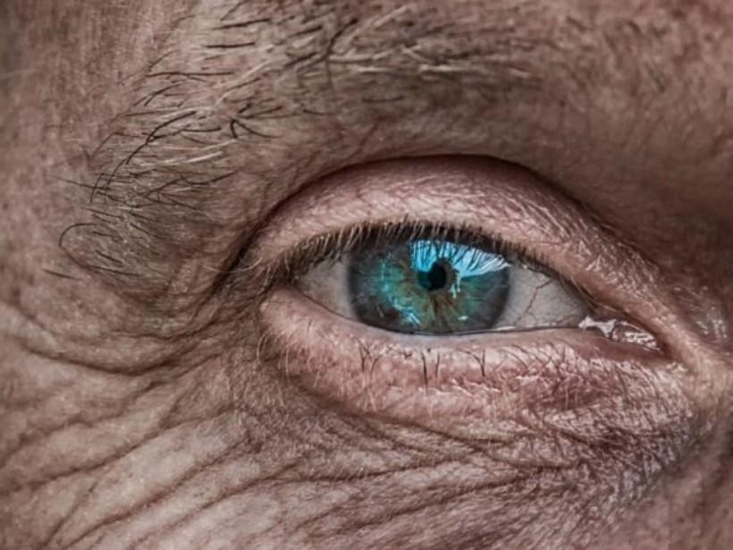 Ученые с помощью мышей узнали, отчего стареет кожа