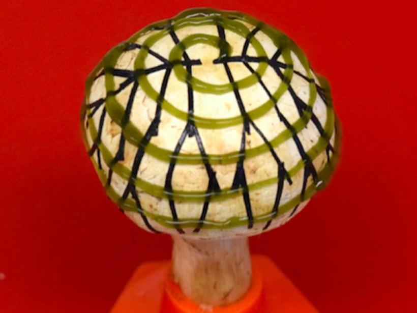Американские ученые создали грибы, вырабатывающие электричество
