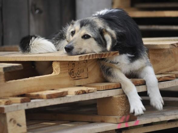 Рада провалила запрет массовой эвтаназии бездомных животных - нардеп