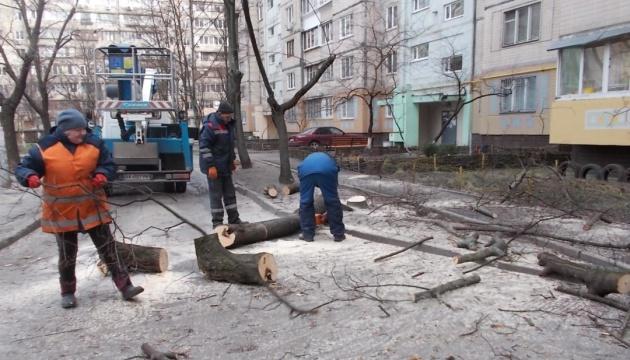 """Мораторий на """"омоложение"""" деревьев в Киеве: почему и для чего?"""