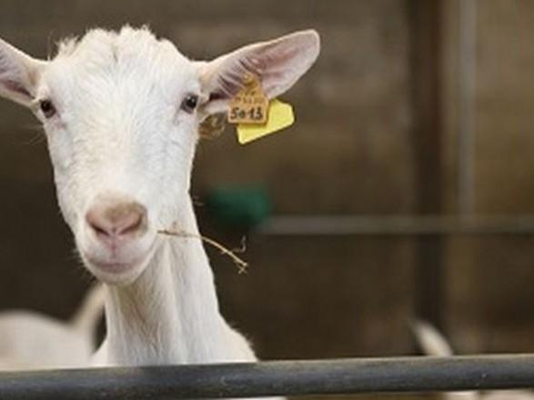 Контроллеры рассказали, когда украинцы будут регистрировать скот бесплатно