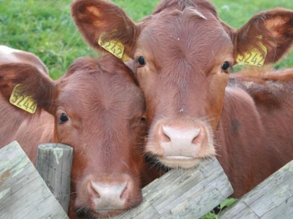 Раду просят не тормозить экспорт и изменить советскую идентификацию животных