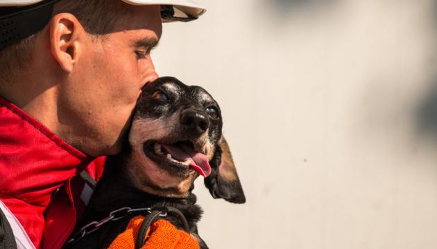 Украинские собаки-спасатели вошли в сотню лучших в мире