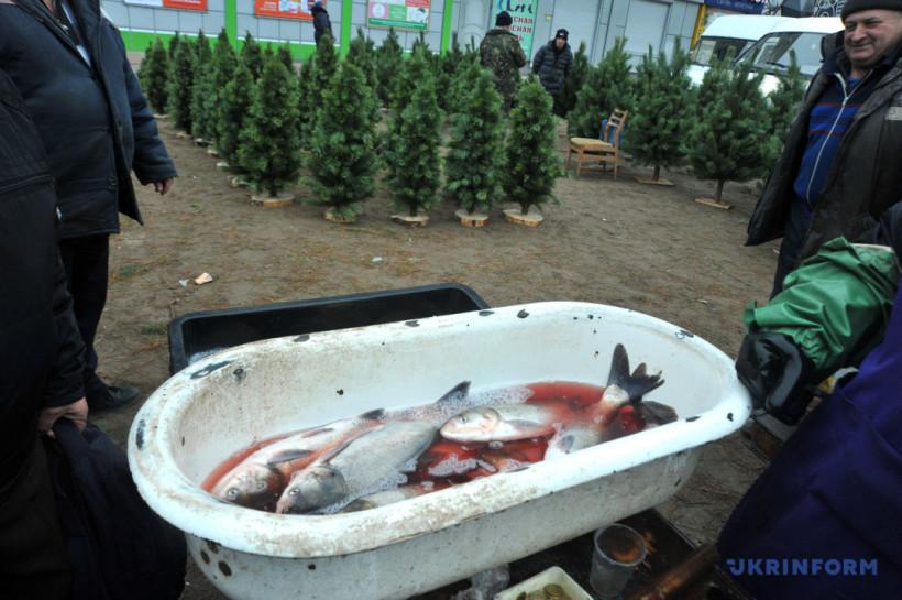 Рекорд трембитарей, декабрьская сакура и припятская елка