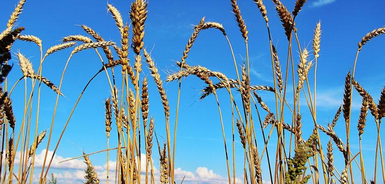 защита и удобрение растений
