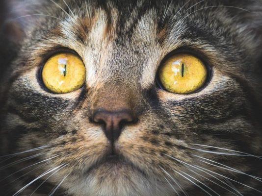 Коты источники короавируса.
