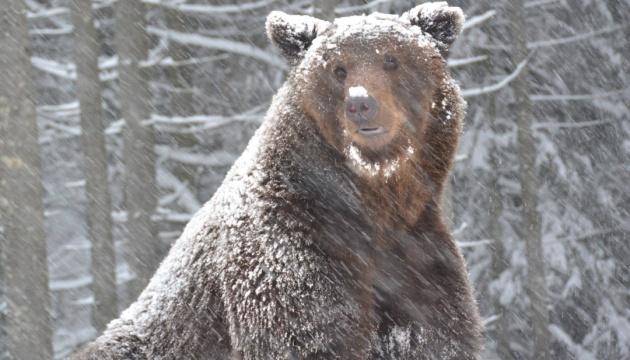 Природа в шоке от такой зимы