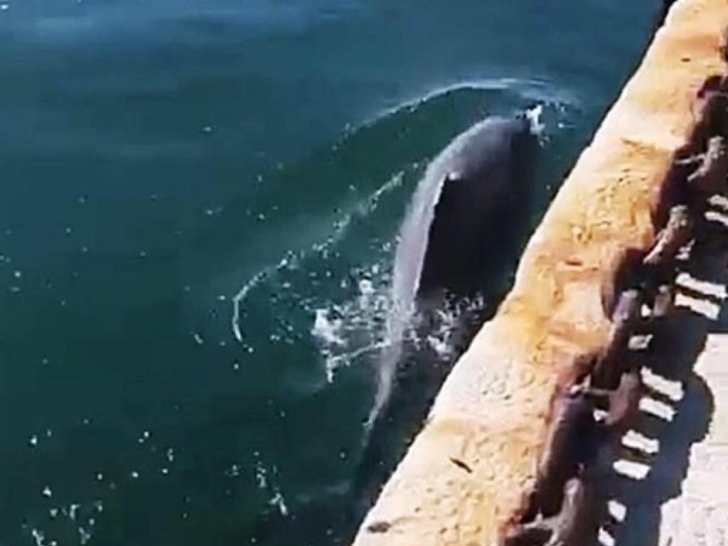 Дельфин в Венеции