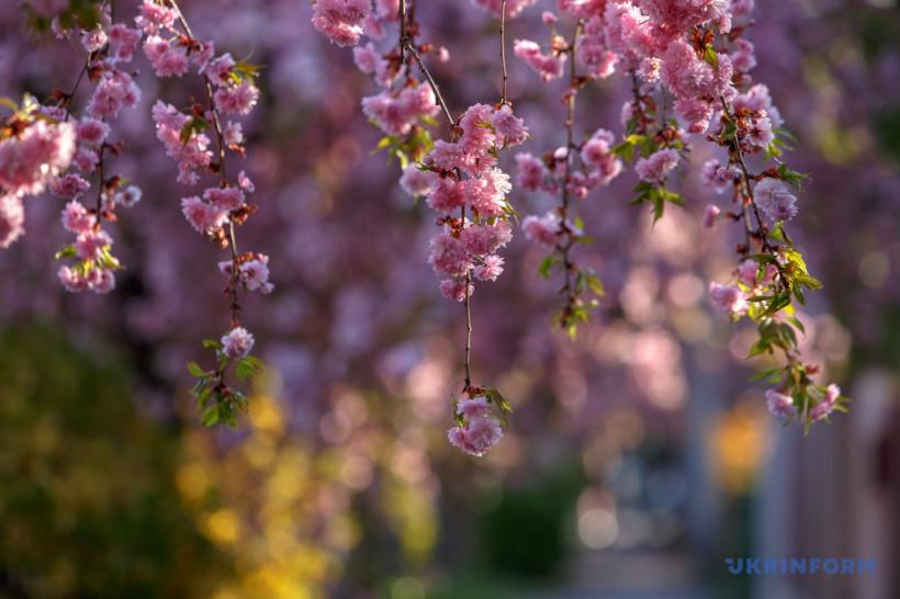 Пыльный четверг, лавра на карантине и весна в расцвете