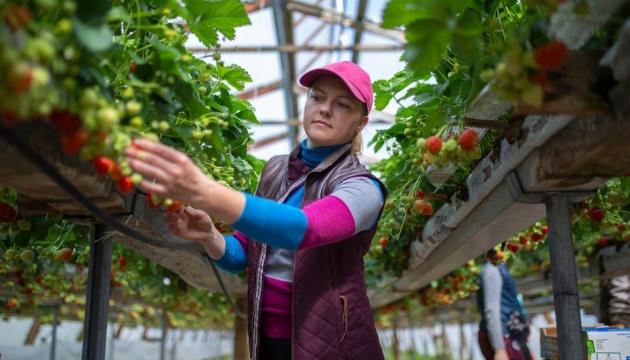 Финляндия планирует забирать сезонных работников из Украины чартерами