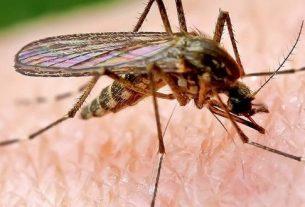 Комары как источники переноса коронавируса.