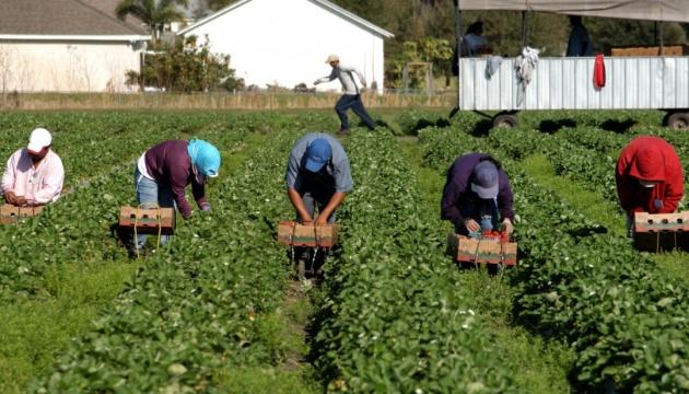 Польша разрешила украинским заробитчанам работать в агросекторе и во время обсервации