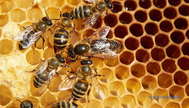 Гибель пчел из-за пестицидов: назвали самые проблемные регионы