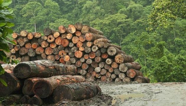 Срок действия последней стратегии лесного хозяйства завершился в 2015 году - Гослесагентство