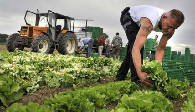 Работодатели Эстонии обжалуют в суде решение о депортации 12 украинцев
