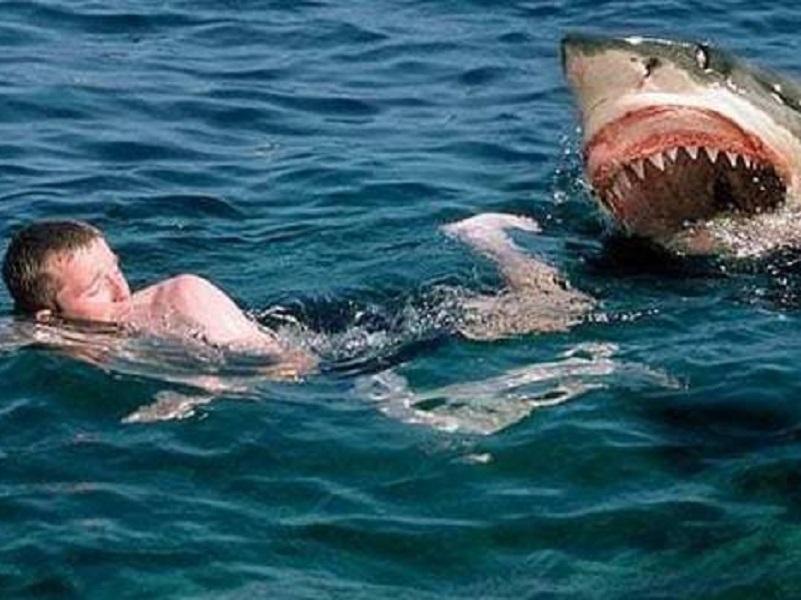 В Египте акула напала на туристов из Украины.