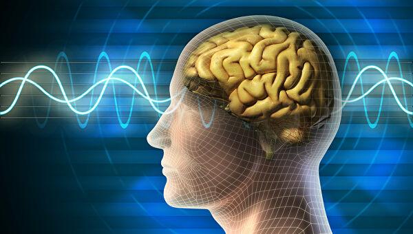 Мозг человека. Фото - ria.ru