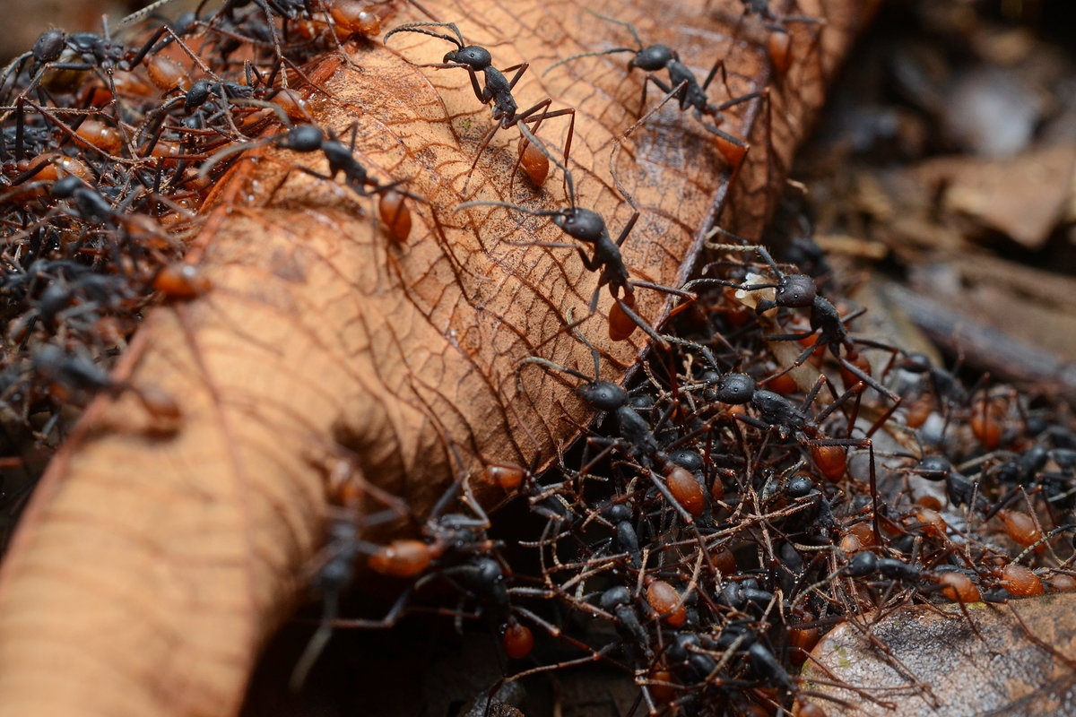 Сила муравьиного народа