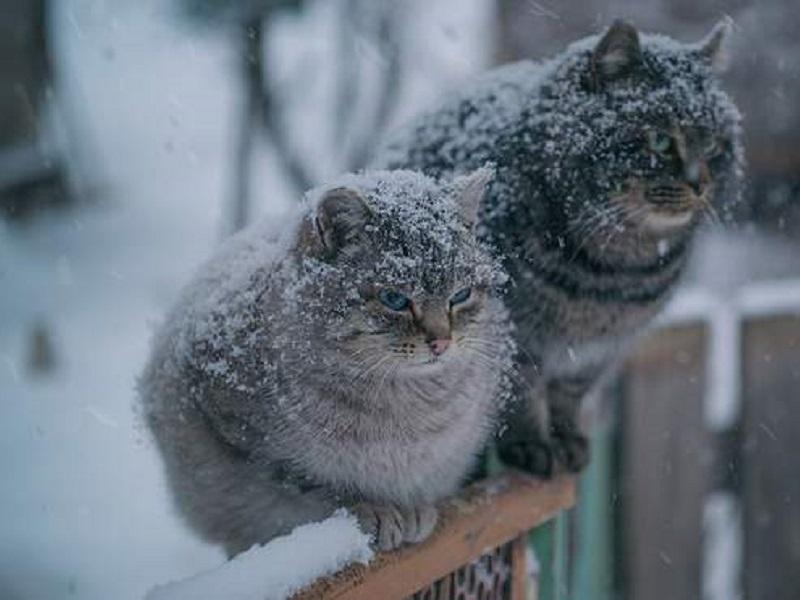 Прогноз погоды на 30 ноября 2020.30 ноября в Украине ожидается холодная погода со снегом и дождем. Фото: 24tv.ua.