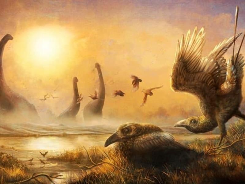 Доисторические птицы