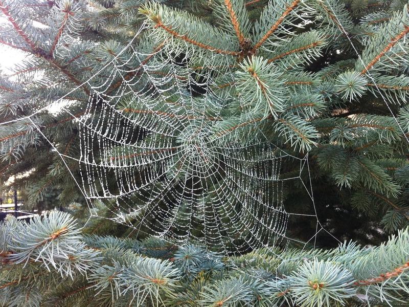 Красивая паутина
