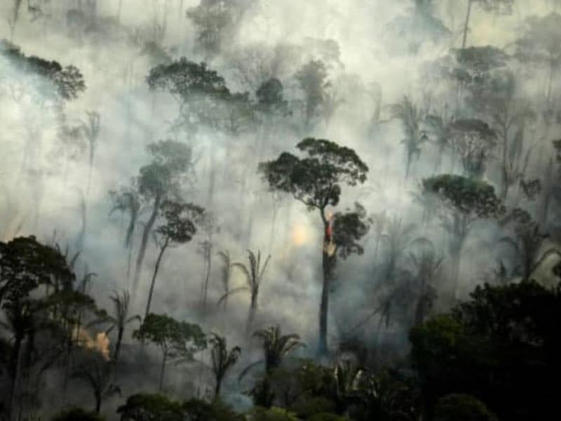 Леса Бразилии