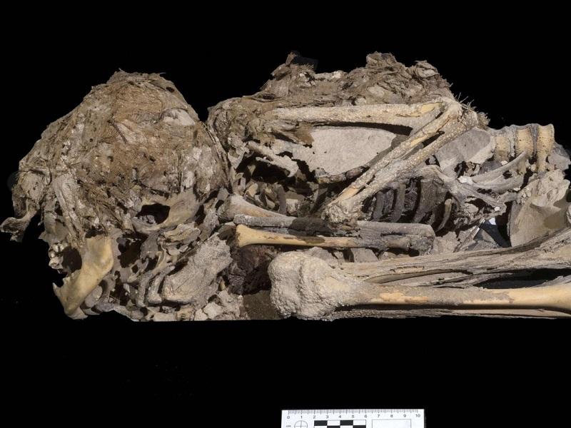 Загадочная мумия ребенка обнаружена при раскопках в Израиле.
