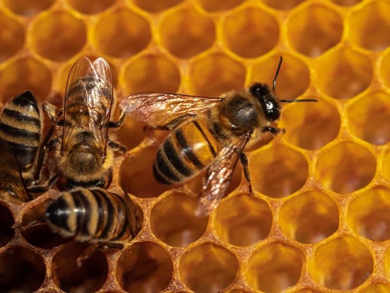 Две пчелы смогли без посторонней помощи открыть пластиковую бутылку.