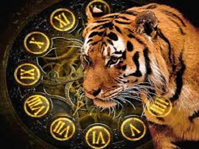 Этим Зодиакам 2022 год Тигра принесет удачу и успех.